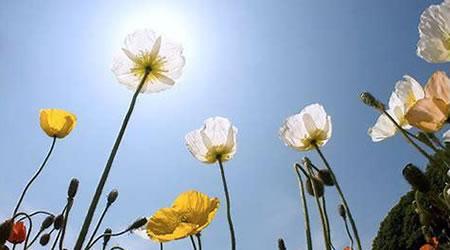 經典心情語錄:人活的是心情,心若向陽,歲月無恙【經典語錄網】