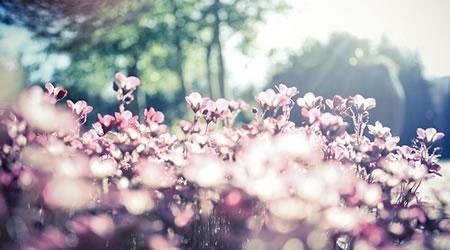 30個經典英文語錄:別在生氣的時候做決定,別在開心的時候說承諾【經典語錄網】